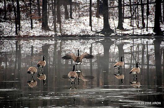 Winter Lake by Aron
