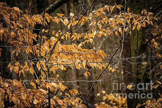 Winter Leaves by JW Hanley