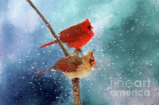 Winter Love by Darren Fisher