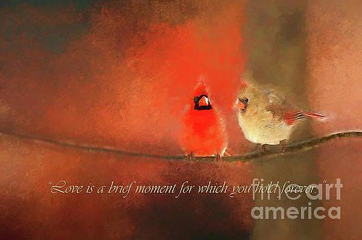 Winter Love2 by Darren Fisher