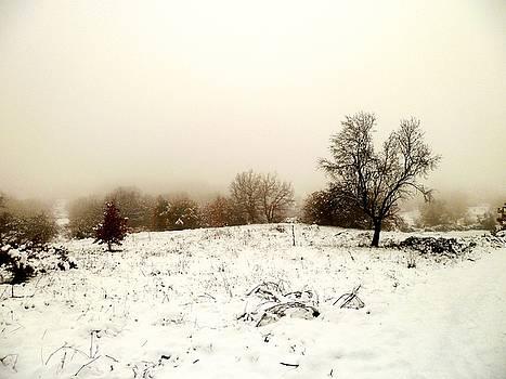 Winter magic landscape by Donatella Muggianu