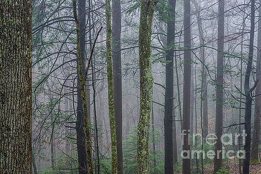 Winter Mist in the Forest by Thomas R Fletcher