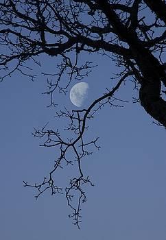 Winter Moon by Sophie De Roumanie