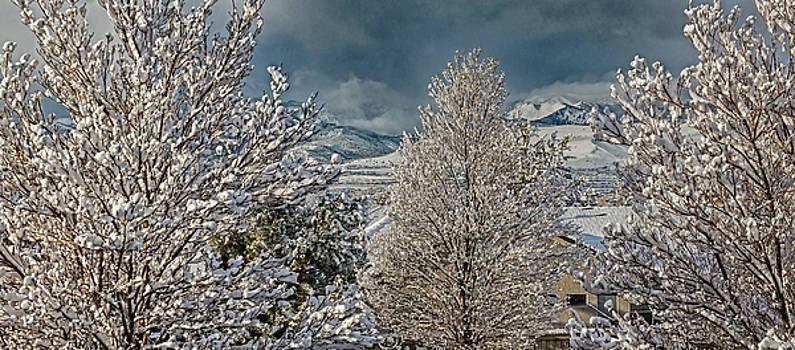 Winter Panoramic by Nancy Marie Ricketts