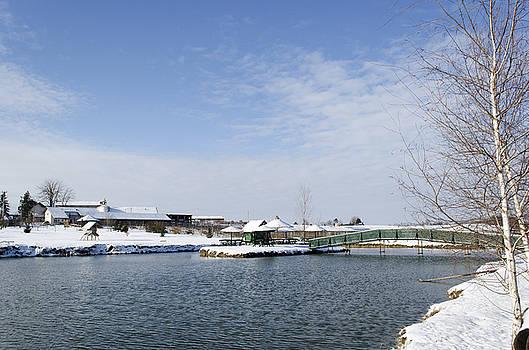 Winter Pond by Srdjan Fesovic