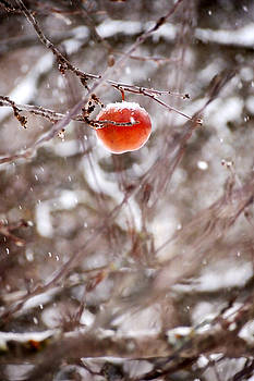 Winter Red by Angie Rea