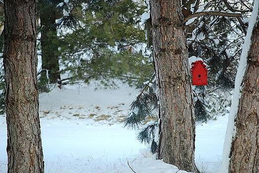 Winter Refuge in the Pines by Peter  McIntosh