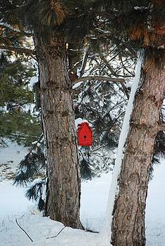 Winter Refuge by Peter  McIntosh
