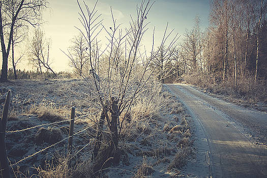 Winter Road by Cindy Grundsten