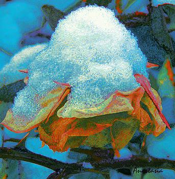 Winter Rose II by Anastasia Savage Ealy