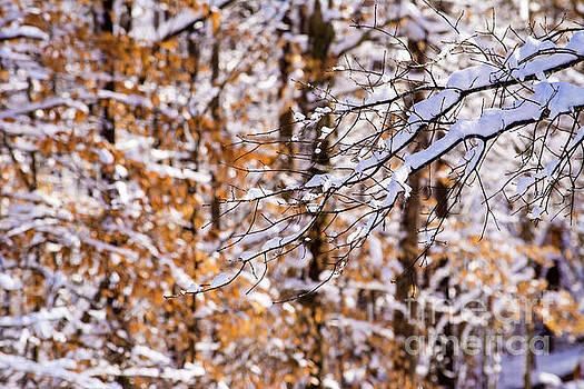 Winter Scene  by JW Hanley