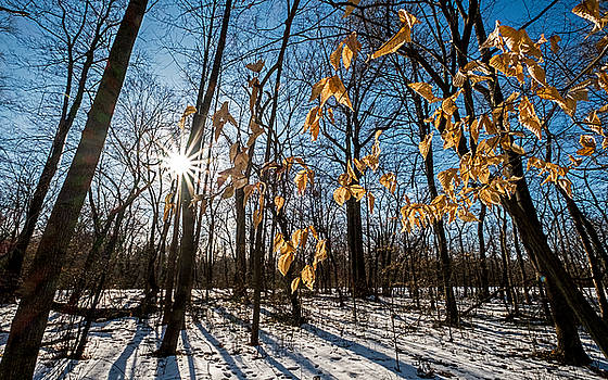 Winter Shadows and Light by Glenn DiPaola