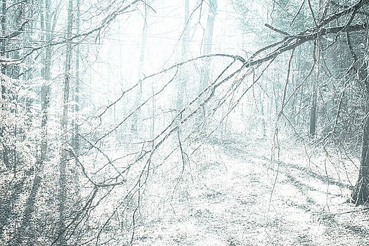 Winter Solstice  by JW Hanley