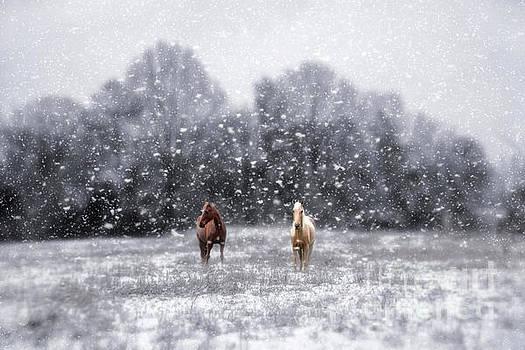 Winter Storm by Darren Fisher