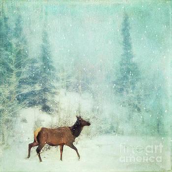 Winter stroll by Priska Wettstein