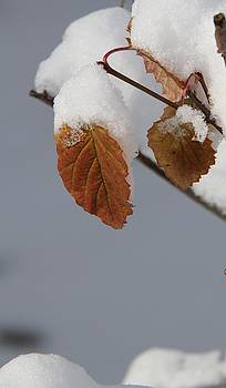Winter Studies #1 by Sue Thomson