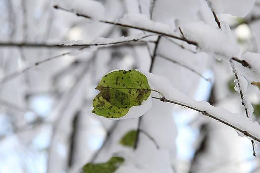 Winter Studies #2 by Sue Thomson