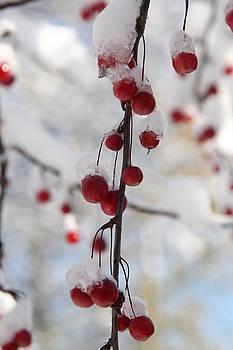 Winter Studies #3 by Sue Thomson
