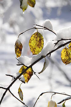 Winter Studies #5 by Sue Thomson