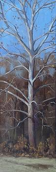 Winter Sycamore by Todd Derr