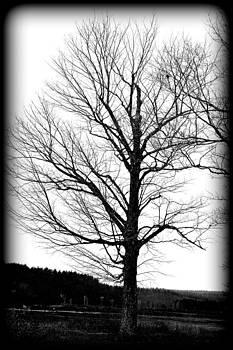 Winter Time Black by Sarah Hamlin