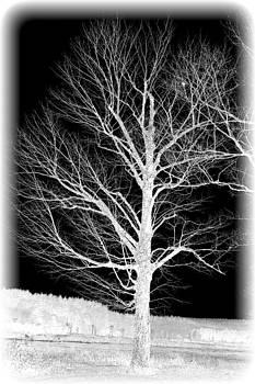 Winter Time by Sarah Hamlin