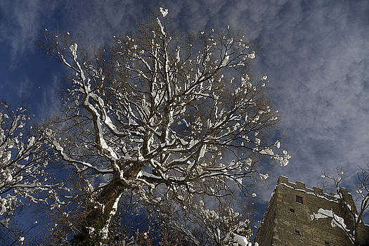 Winter tree and castle by Andrea Gabrieli