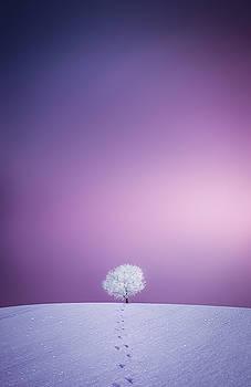 Winter Tree by Bess Hamiti