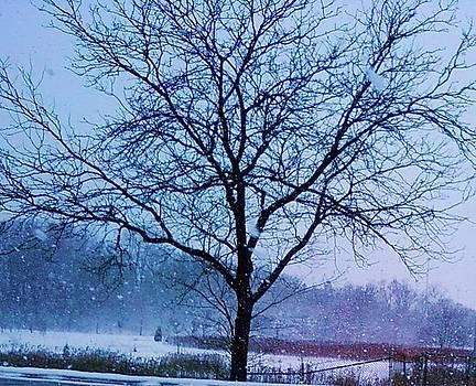 Winter Tree II by Anna Villarreal Garbis