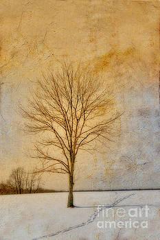 Randy Steele - Winter Tree Morning Light