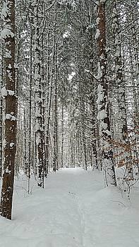 Winter Walk by Amanda Edwards