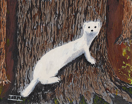 Winter Weasel by David Jackson