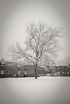 Winter Wonderland by Mandy Wiltse