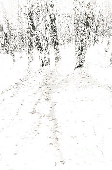 Winter's Shadows by The Forests Edge Photography - Diane Sandoval