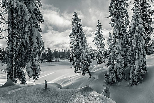 Winter Wonderland Harz in monochrome by Andreas Levi