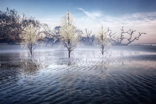 Wintery Coast by Debra and Dave Vanderlaan