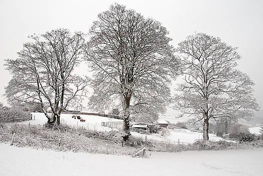 Wintery scene by Pete Hemington