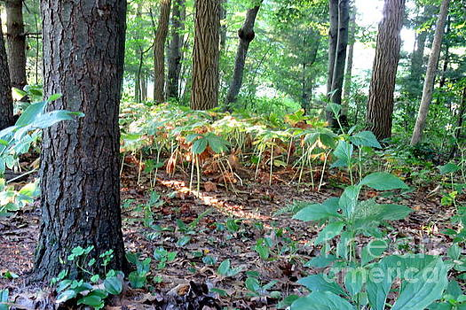 Wisconsin Forest Floor by Selma Glunn
