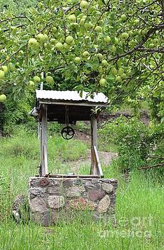 Wished Well For Apples by Natalie Ortiz