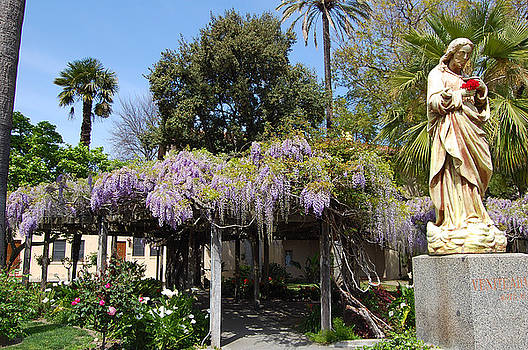 Wisteria Blessings by Carolyn Donnell
