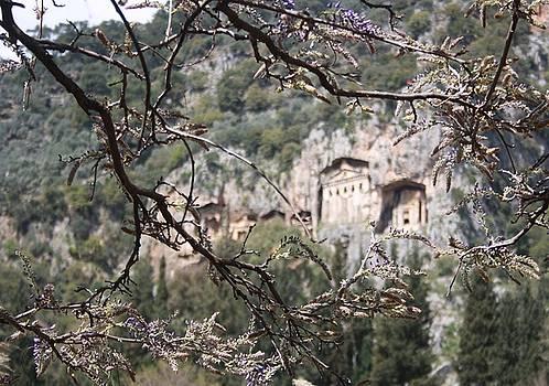 Tracey Harrington-Simpson - Wisteria Buds Surrounding the Lycian Tombs Dalyan