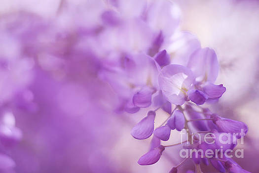 LHJB Photography - Wisteria Dreams....