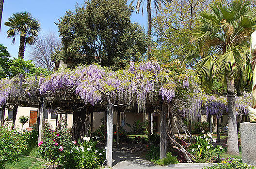 Wisteria Walkway by Carolyn Donnell