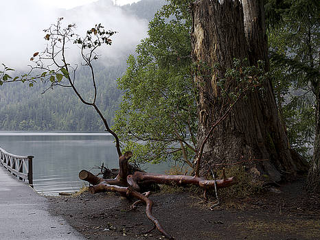 Witness Tree - peaceful lake by Jane Eleanor Nicholas