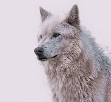 Wolf Art by Athena Mckinzie