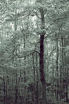 Wonder Tree by The Art Of Marilyn Ridoutt-Greene