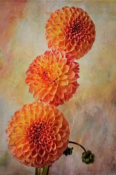 Wonderful Orange Dahilas by Garry Gay