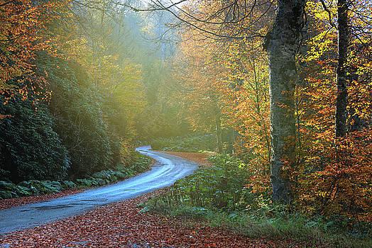 Wonderroad by Musa GULEC