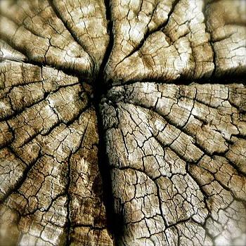 Wood Cross by Tina Valvano