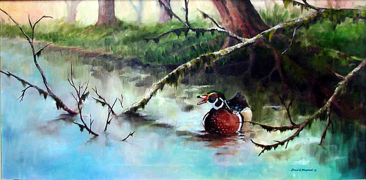Wood Duck by David  Maynard